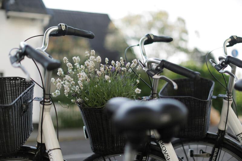 Cykle.800px.jpg